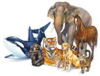 regno-animale