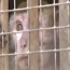 3/7/14 – I macachi prigionieri a Modena / Il video della visita dell'on. Bernini
