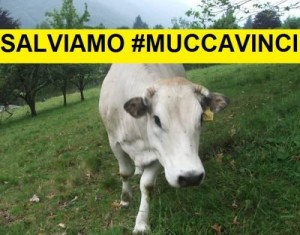 salviamo Mucca Vinci