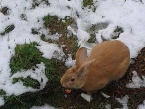 coniglietti-torino-3