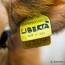 Salvare il progetto Gorgona / Restiamo animali su Radio Radicale