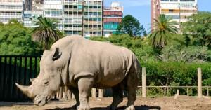 BuenosAires1_zoo_essereanimali-1200x627-1038x542