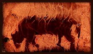 immagine-per-brani-di-carne-300x174
