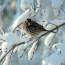 14/1/17 – Come preparare tortine per uccelli / SOS GELO