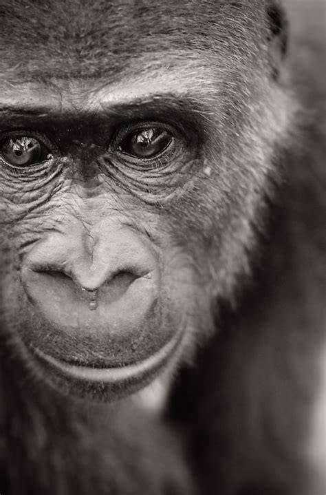 Animali a Tre Soldi su Radio3 (c'è anche Restiamo animali)