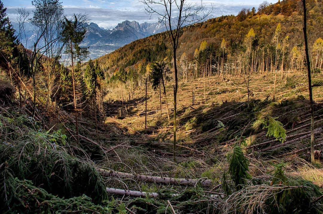 10/11/18 – I selvatici nella catastrofe degli ecosistemi alpini; SOS per la foresta di Bialowieza; stop pellicce