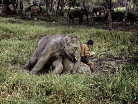 23/2/19 – McCurry fotografo di animali; latte, il documentario proibito; la plastica minaccia le balene
