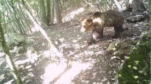 19/7/19 – L'orso braccato dal potere; fratino vs Jovanotti; l'attivista Kim Basinger