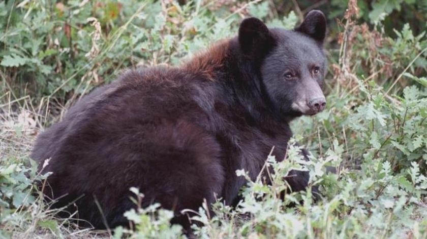 17/1/20 – Troppo caldo, orsi senza letargo; il sindaco boccia le gite allo zoo; il bistrot con gatti
