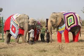 3/7/20 – Orsi liberati; Louise Michel rivoluzionaria e animalista; elefanti in pericolo in India
