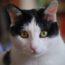 La lunga vita di Camille, un gatto speciale / di Annamaria Rivera