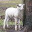 2/4/21 – I dolori di Pasqua; animali in Costituzione?; la tassa sulla carne